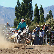 Patrick McCarthy from Rakaia in action during the Open Rope and Tie at the Wanaka Rodeo. Wanaka, South Island, New Zealand. 2nd January 2012