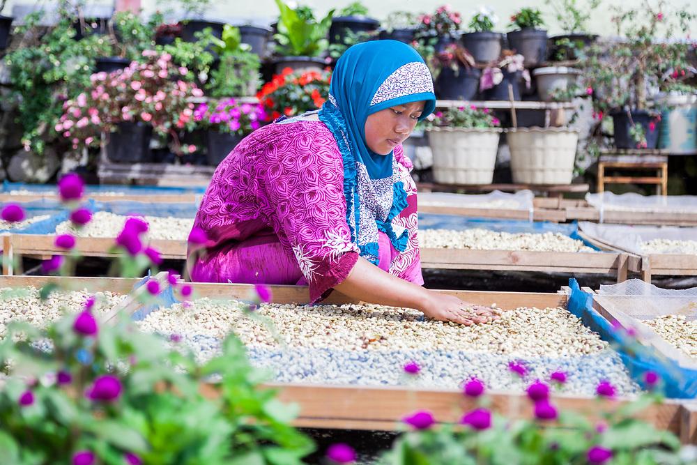 Ibu Ningsi (22) dries coffe beans at a Kokowa Gayo associated farm.  She has been working as a farmer for 2 yrs.