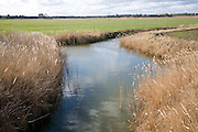 Reeds drainage channel, Butley marshes, Sufolk