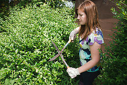 Woman cutting hedge with shears