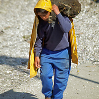 South America, Chile, Puerto Montt. A fisherman carries load of  fresh clams to market.