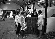 09/08/1967<br /> 08/09/1967<br /> 09 August 1967<br /> R.D.S. Horse Show 2nd day at Balls bridge, Dublin. Photo shows Miss Yvonne Barton (15), Miss Judith Andrews (14), Miss Shelagh Waring (14 and Miss Louise Sweeney (15).