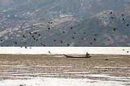 Local fisherman and pygmy cormorants, Lake Skadar National Park, Montenegro © Rudolf Abraham