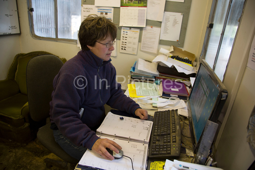 Sally Banks collating data on the herd in the on site office. With a closed herd with no outside influence from other herds off site (apart from the introduction of a bull) the aim is that the cows have one calf per year to keep them milking and to replenish their stocks. To ensure that this provenance as well as each separate element on the farm runs as well and as profitably as possible, all aspects of data are collected and computerised. Wildon Grange Dairy Farm, Coxwold, North Yorkshire, UK. Owned and run by the Banks family, dairy farming here is a scientific business, where nothing is left to chance. From the breeding, nutrition and health of their closed stock of Holstein Friesian cows, through to the end product, the team here work tirelessly, around to clock to ensure content and healthy animals, and excellent quality milk.