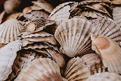 THEMENBILD - Muscheln in einem Fischgeschäft in einer kleinen Gasse, aufgenommen am 04. Oktober 2019 in Venedig, Italien // a fish shop in a small alley, in Venice, Italy on 2019/10/04. EXPA Pictures © 2019, PhotoCredit: EXPA/Stefanie Oberhauser