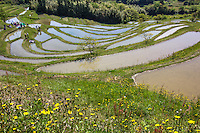 """The curvy rice paddies and fields of the Oyama Senmaida rice terraces undulating up the mountainside, are the very image of a Japanese farm village.   Because of the increase in machinery use and the aging  farmer population in Japan, terraced rice fields are rapidly disappearing as it must be done mostly by hand.  Oyama Senmaida is now maintained by an unusual co ownership system.  This both helps preserve this landscape and gives urban dwellers a chance to try their hand at farming. Thanks to this innovative system the terraced rice paddies of Oyama Senmaida Chiba continue to be cultivated to this day.  Terraced rice fields are common in Japan's mountainous countryside, where agriculture has been active for thousands of years. They are built in stair-like tiers along the slope of a mountain or a valley and are often called """"Senmaida"""", or thousand rice fields, because the field is divided into many small sections. Stones and mud are used to separate the sections and prevent the water from leaking out of them."""