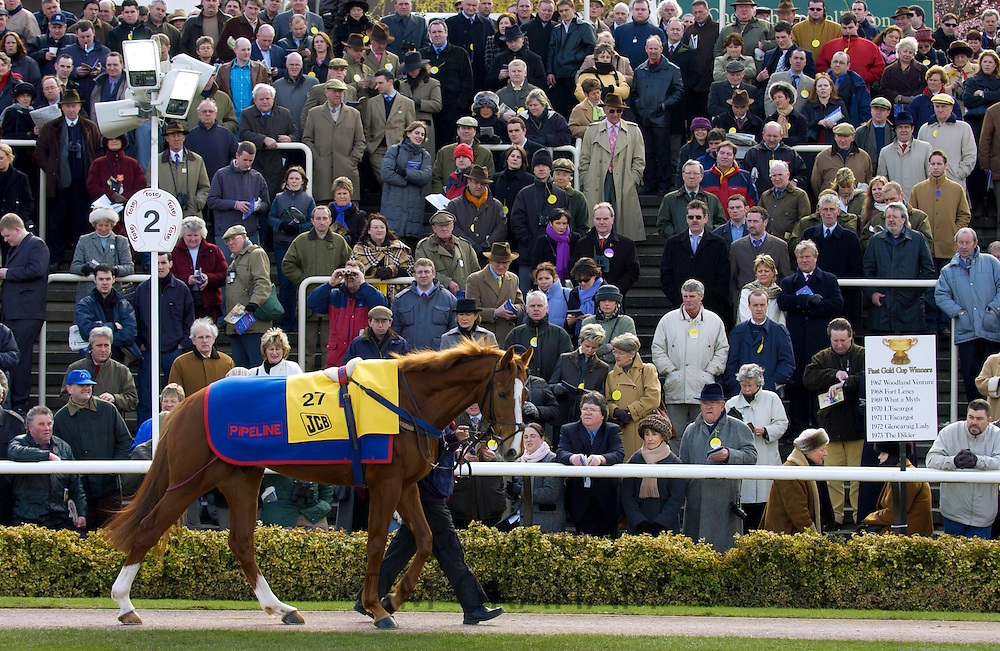 Racehorse Pipeline sponsored by JCB group being paraded in Parade Ring at Cheltenham Racecourse, UK