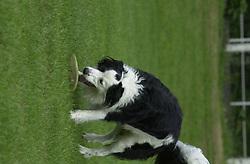 Eddie Sander with his Dogs Jackson and Inka<br /><br />18 June 2004<br /><br />Copyright Paul David Drabble<br /> [#Beginning of Shooting Data Section]<br />Nikon D1 <br /> Focal Length: 145mm<br /> Optimize Image: <br /> Color Mode: <br /> Noise Reduction: <br /> 2004/06/18 09:48:11.0<br /> Exposure Mode: Manual<br /> White Balance: Auto<br /> Tone Comp: Normal<br /> JPEG (8-bit) Fine<br /> Metering Mode: Center-Weighted<br /> AF Mode: AF-C<br /> Hue Adjustment: <br /> Image Size:  2000 x 1312<br /> 1/250 sec - F/6.3<br /> Flash Sync Mode: Not Attached<br /> Saturation: <br /> Color<br /> Exposure Comp.: 0 EV<br /> Sharpening: Normal<br /> Lens: 80-200mm F/2.8<br /> Sensitivity: ISO 200<br /> Image Comment: <br /> [#End of Shooting Data Section]