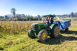 Produção Agrícola em Gravataí. A área do município, segundo o IBGE é de 463,758 km², sendo que 121,37 km² constituem a zona urbana e os 376,45 km² restantes constituem a zona rural. Foto: Marcos Nagelstein/ Agência Preview