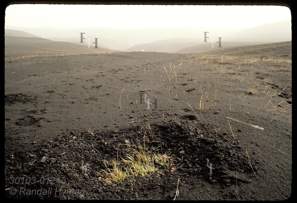 Patch of grass dug from volcanic cinder reveals how deeply 1980 Hekla eruption buried land. Iceland