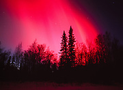 Brilliant red aurora in the early evening hours during the geomagnetic storm on November 5, 2001, view southwest over boreal forest near the Little Susitna River valley, Alaska.
