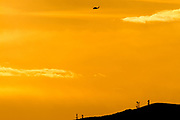 A Sikorsky UH-60 Black Hawk helicopter flying in sunset light over Kanagawa, Japan. Tuesday January 17th 2017
