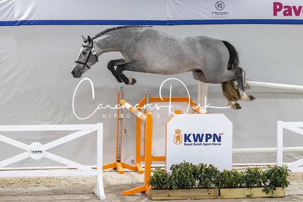 202, Nacho TCS<br /> KWPN Hengstenkeuring 2021<br /> © Hippo Foto - Dirk Caremans<br />  03/02/2021