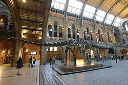 File photo dated14/12/16 of the Hintze Hall at the Natural History Museum, London. London has been named the museums capital of the world after topping a chart of the most visited global exhibition venues.