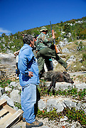 Two men, one holding shotgun, with wild pig they have killed. Rascane, Croatia