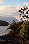 Bald Eagle, Sitka, Alaska