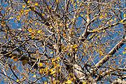 Late Autumn leaves on blue