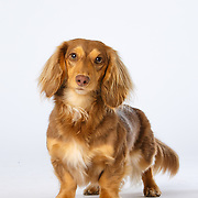 20200123 Michelle Health Dogs Shot 3