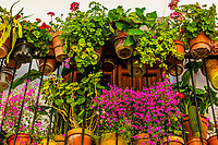 Flower pots on a balcony, Alhama de Granada,Granada Province, Andalusia, Spain.