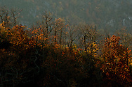 A ridge line leading from Little Table Rock in the Pisgah National Forest is burned with Fall color