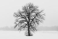 https://Duncan.co/tree-silhouette-02/