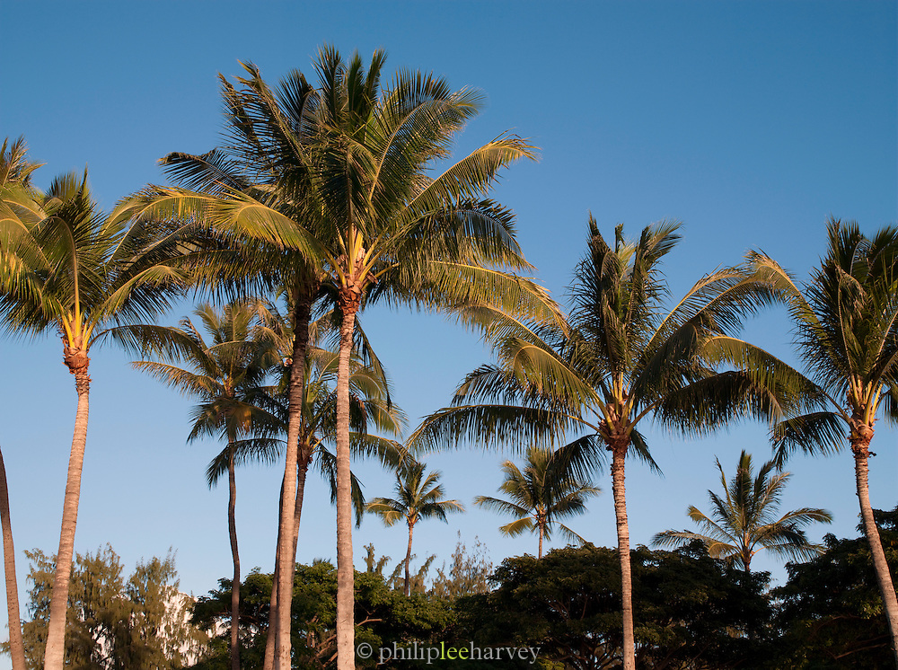 Palm trees at Waikiki Beach, Honolulu, O'Ahu, Hawai'i