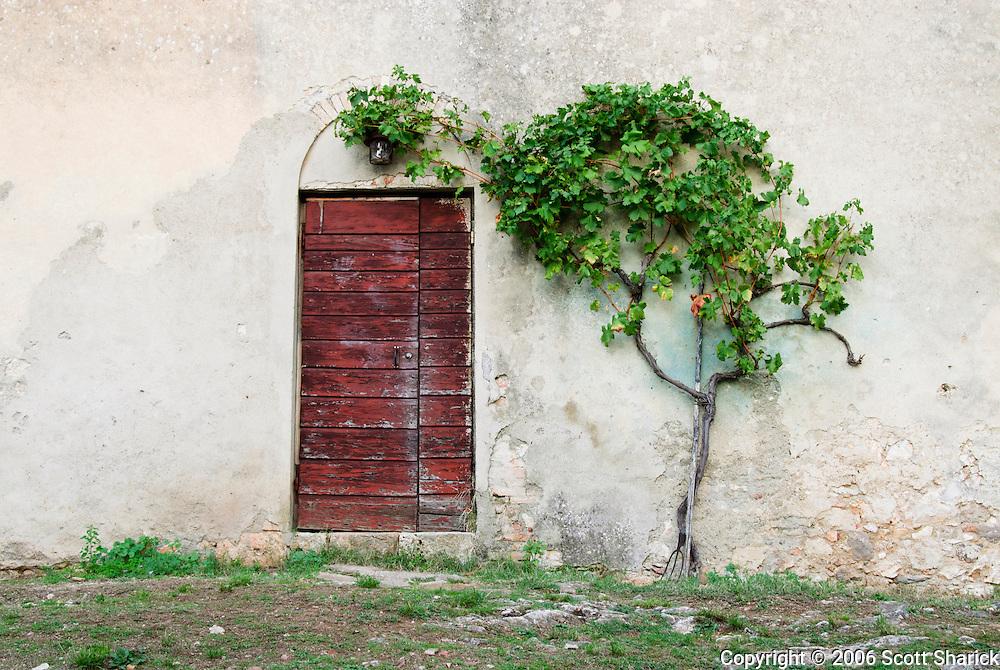 A vine creeps around an old door on a small Italian farm.