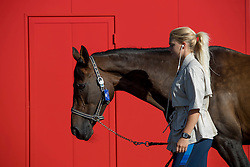 Team Sweden<br /> Departure of the horses to the Rio Olympics from Liege Airport - Liege 2016<br /> © Hippo Foto - Dirk Caremans<br /> 30/07/16