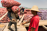 24 APRIL 2014 - CHIANG SAEN, CHIANG RAI, THAILAND: Burmese laborers unload Chinese garlic at the port in Chiang Saen, Thailand. Chinese businesses play an increasingly important role in the Chiang Rai economy. Consumer goods made in China are shipped to Thailand while agricultural products made in Thailand are shipped to China. Large Chinese cargo boats ply the Mekong River as far south as Chiang Saen in the dry season and Chiang Khong when river levels go up in the rainy season.    PHOTO BY JACK KURTZ