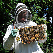 Honeybees. Tony Riome from Minishant with his colony of bees.  .Picture Robert Perry The Scotsman 30th Aug 2012