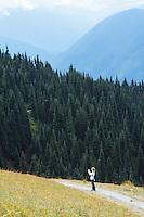 Hurricane  Hill Trail. Hurricane Ridge, Olympic National Park, WA.