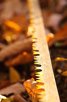 Rusted saw blade left outdoors