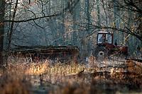 08.12.2015 Puszcza Bialowieska woj podlaskie N/z wywoz ciagnikiem rolniczym scietego drewna z lasu fot Michal Kosc / AGENCJA WSCHOD