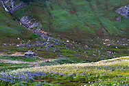 The Edith Creek Chlorination House sits amid the Sitka Valerian and Lupines at Paradise in Mount Rainier National Park, Washington State, USA