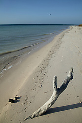 Branch in the sand at Cayo Jutia; Pinar Province; Cuba,