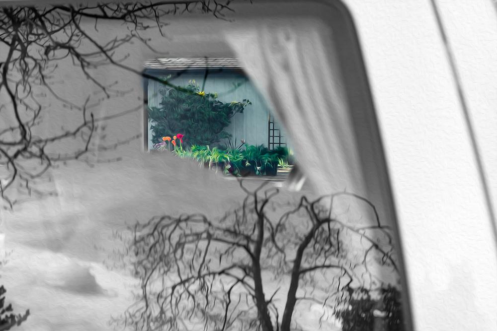 Abstract framing of a domestic garden, spring, Olympic Peninsula, Washington, USA