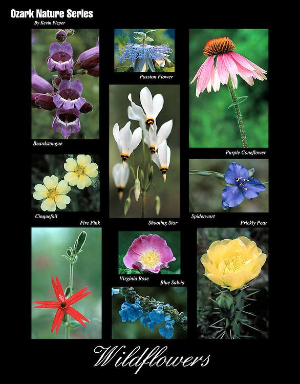 Ozark Nature Series: WIldflowers