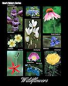 Wildflower poster, plus