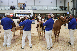 © Licensed to London News Pictures. 11/03/2017. Carlisle, UK. Men line up with their cattle in the ring at the annual UK Dairy Expo. The event, one of the biggest of it's kind in the UK, is in it's sixth year and is held at the Borderway Exhibition Centre in Carlisle Cumbria.  Photo credit : Ian Hinchliffe/LNP