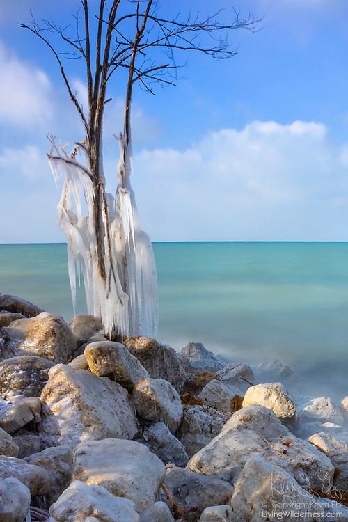 Icicles grow from the branches of a tree near Lake View in Indiana Dunes National Park, Indiana. The ice formed on a 20-degree day when Lake Michigan waves splashed water onto the shore.