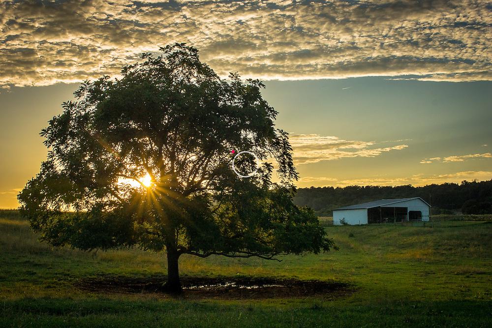 Ferguson Farm Tree