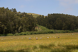 Bucolic country scene on Stage Road north of Pescadero,.San Mateo Coast of California, south of San Francisco.  Photo copyright Lee Foster, 510-549-2202, lee@fostertravel.com, www.fostertravel.com. Photo 472-31078