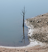http://Duncan.co/lone-dead-tree-in-water