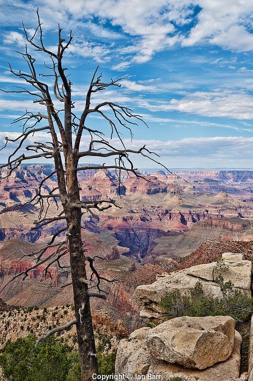 Dead Tree at Grand Canyon National Park, Arizona, USA.