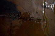 Sao Goncalo do Rio Preto_MG, Brasil...Parque Estadual do Rio Preto, em Sao Goncalo do Rio Preto, Minas Gerais. Detalhe de uma planta no riacho...The Rio Preto State Park, in Sao Goncalo do Rio Preto, Minas Gerais. In this photo the plant in the watter...Foto: LEO DRUMOND / NITRO