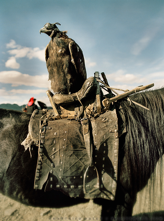 Eagle resting on a horse. At the festival.<br /> Eagle Hunting festival in Western Mongolia, in the province of Bayan Olgii. Mongolian and Kazak eagle hunters come to compete for 2 days at this yearly gathering. Mongolia