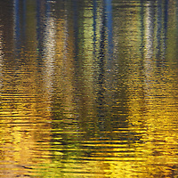 """""""Striking Gold"""" <br /> <br /> Beautiful golden fall reflections on Huron River!"""