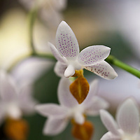 Botanicals: Tropicals and House Plants
