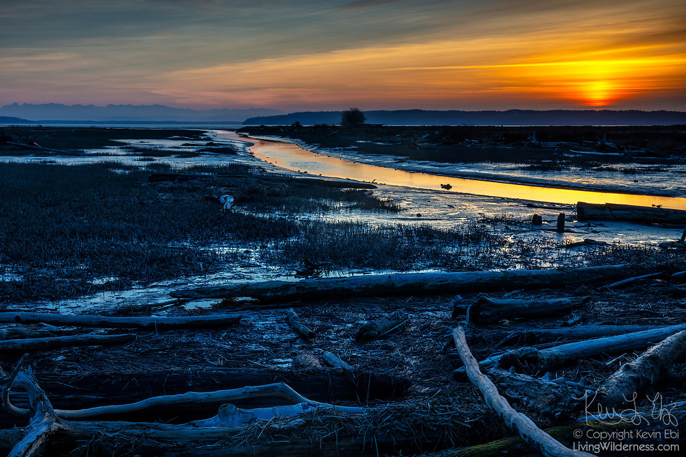 The golden light of sunset is reflected onto a fork of the Skagit River as it flows past driftwood in an estuary along Skagit Bay on Fir Island in Washington state.