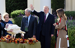 """First lady Melania Trump watches as President Donald Trump pardons """"Peas"""" from South Dakota at the National Thanksgiving Turkey pardoning ceremony in the Rose Garden of the White House in Washington, DC on November 20, 2018. Photo by Olivier Douliery/ABACAPRESS.COM"""
